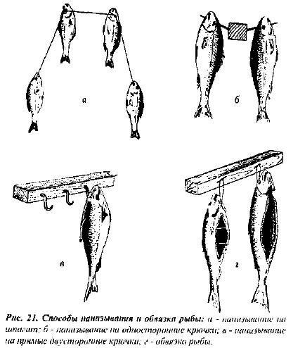 Нанизывание и обвязка рыбы